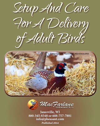 10 Steps to Prepare for a Delivery of Mature Game Birds