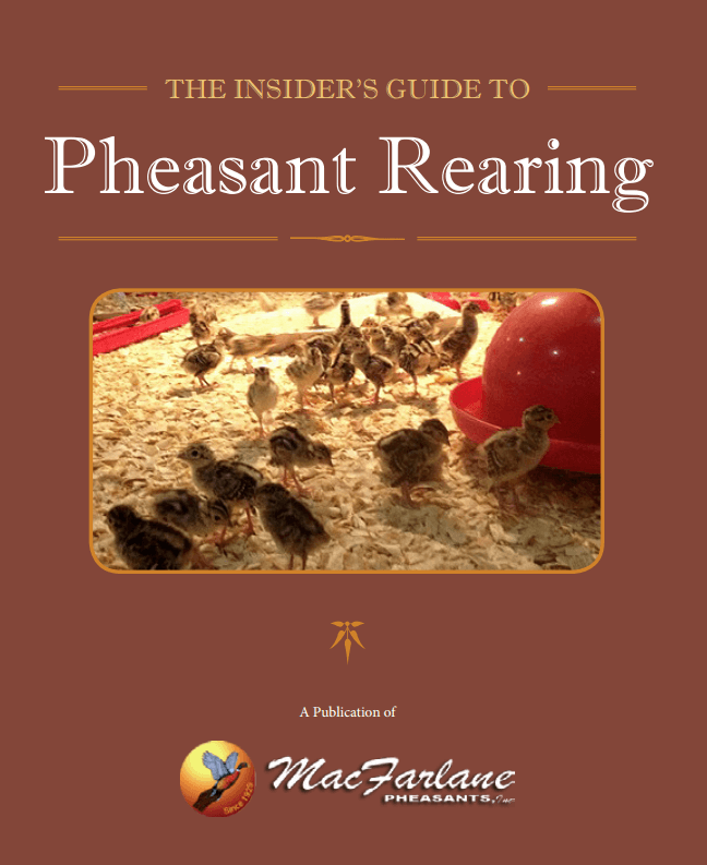 4 Steps to Keeping Pheasants Healthy in Winter