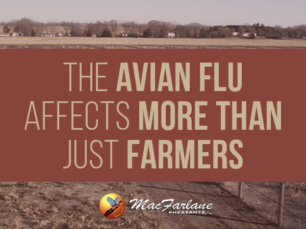 2015 Avian Influenza Outbreak