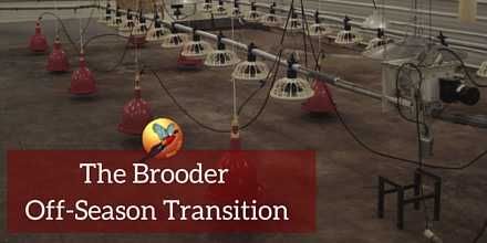 The Brooder Off-Season Transition