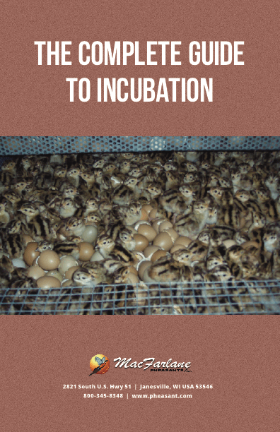 Download The Complete Guide to Incubation