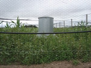 Managing Ground Cover In Game Bird Pens