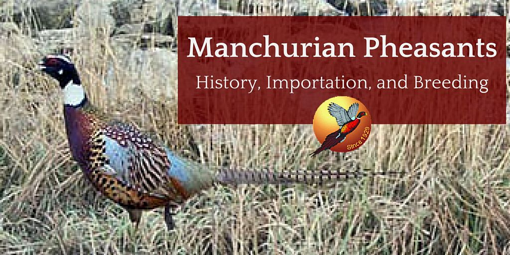 25 Years of the Manchurian Project - Part 1