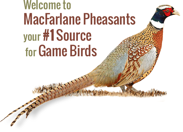 The One Tool No Pheasant Farmer Should Do Without