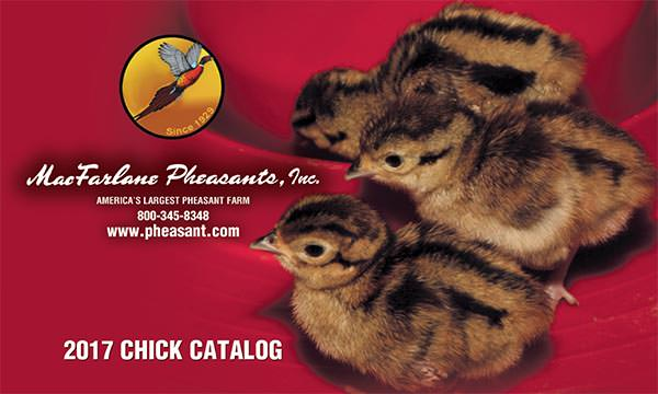 Watch for Our 2017 Chick Catalog!