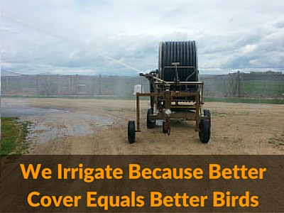 We Irrigate Because Better Cover Equals Better Birds