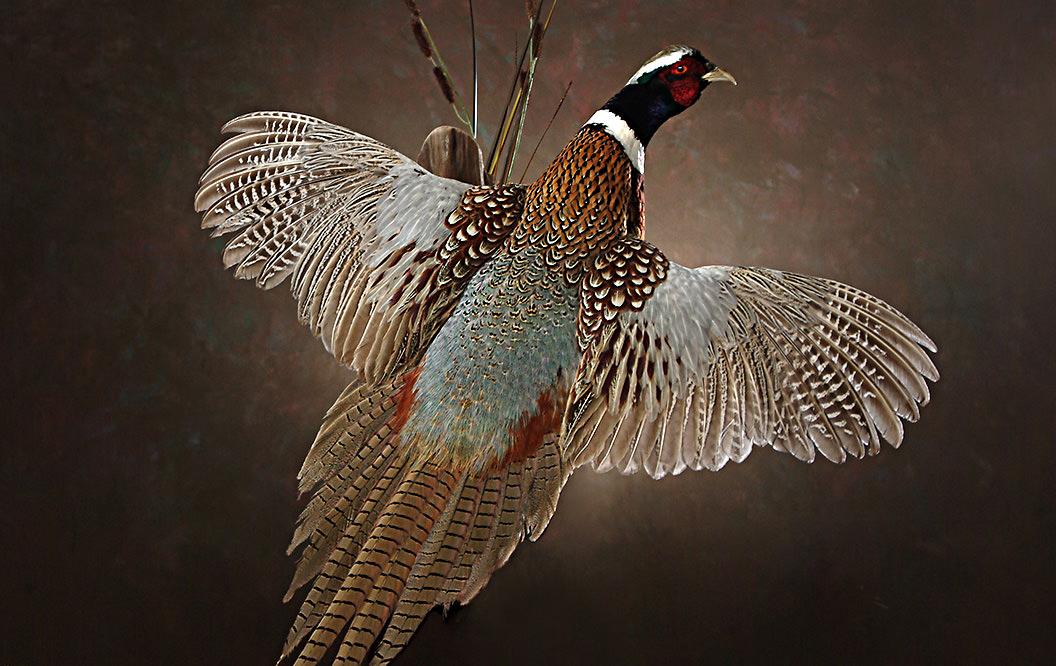 Macfarlane Pheasants America S Largest Pheasant Farm