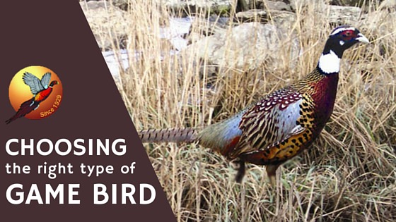 Choosing the Right Type of Game Bird