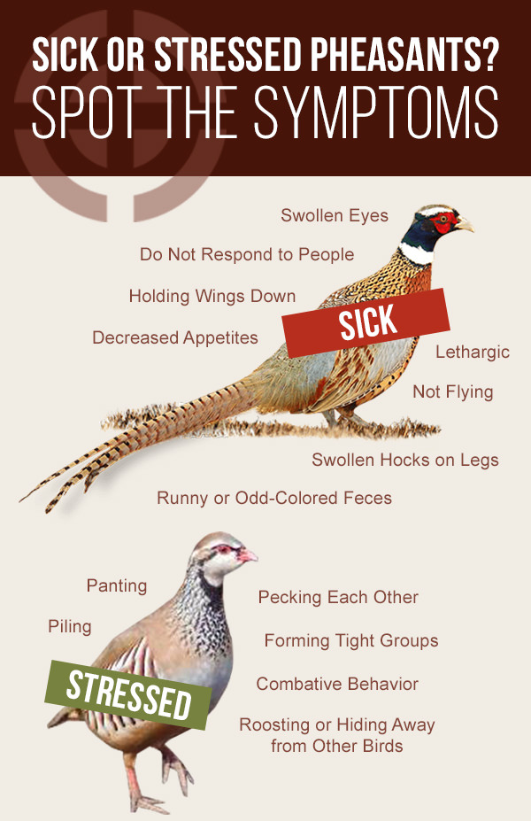 Signs of Sickness or Stress in Birds